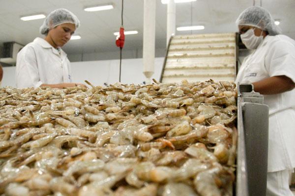Empresa atua no cultivo de Aquicultura em Parnaíba