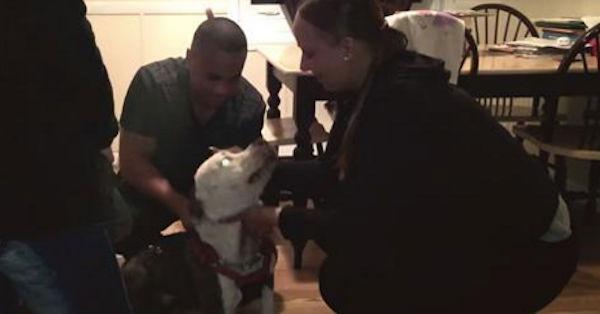Donos de cachorro desaparecido a três anos recuperam animal (Crédito: Reprodução)