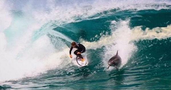 Surfista 'compartilha' onda com golfinho na Austrália (Crédito: Reprodução)
