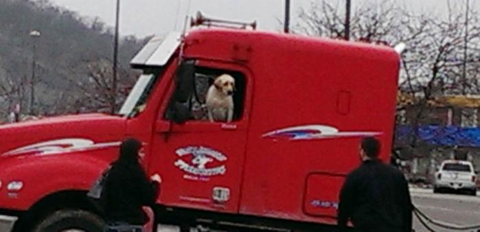 Cachorro encostou no câmbio e caminhão começou a se deslocar