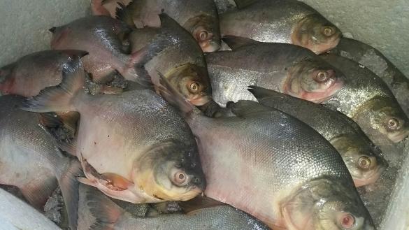 Cuidados para compra de pescado