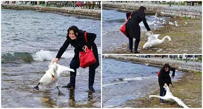 Em busca de selfie com cisne, turista sufoca o animal