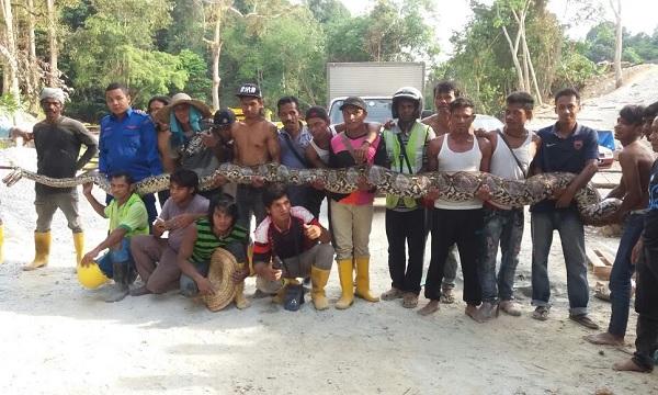Cobra capturada (Crédito: Divulgação)