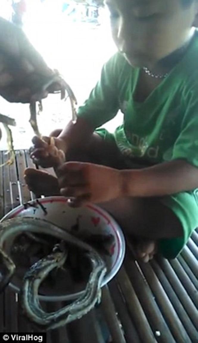 Vídeo chocante mostra criança comendo cobra na Tailândia (Crédito: Reprodução)
