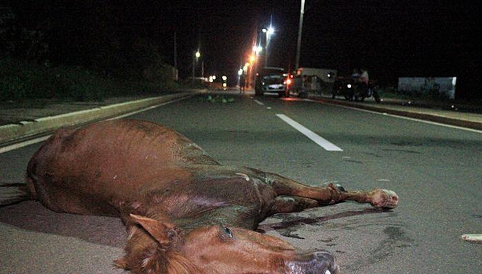 Animal morreu minutos depois da BR-316