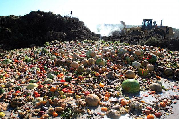 Alimentos desperdiçados