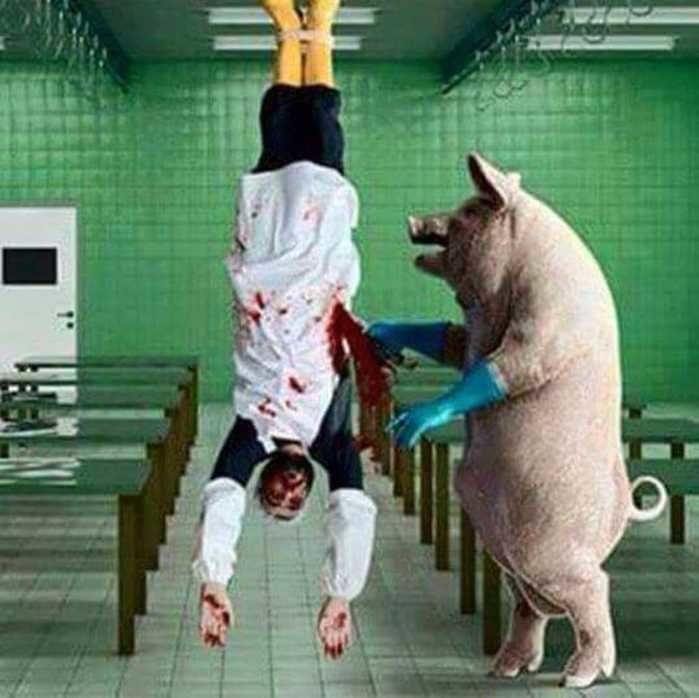 Hora do abate (Crédito: Reprodução)