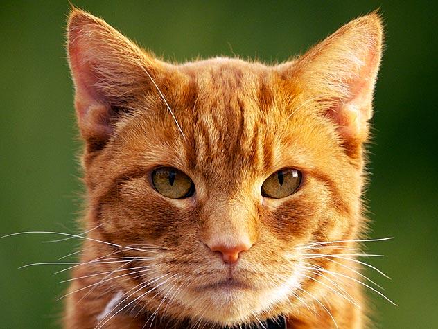 Gato previu a morte de 50 pessoas - Imagem 1