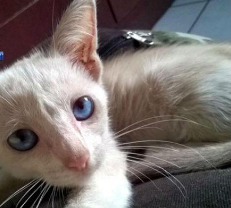 Testemunha disse que gata foi jogada de janela do carro