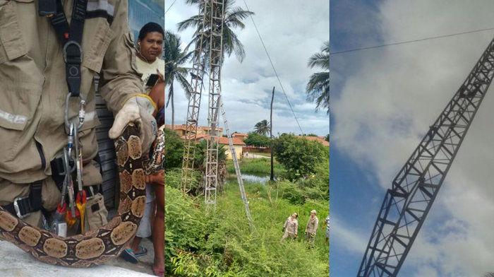 Cobra estava no alto de uma torre em Luís Correira, litoral do Piauí