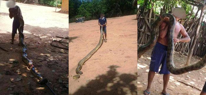 Cobra encontrada em Baixa Grande do Ribeiro