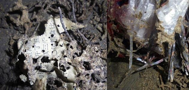 Mulher perde R$ 24 mil em cédulas devoradas por formigas