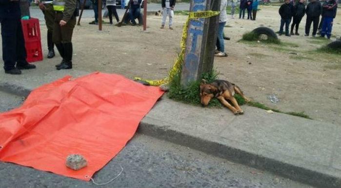 Imagem de cachorro ao lado do corpo de seu done emociona na web