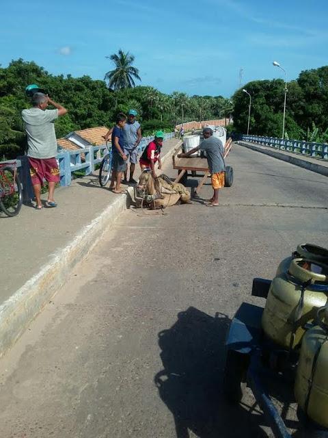 Animal ficou preso em buraco aberto na ponte (Crédito: Reprodução)