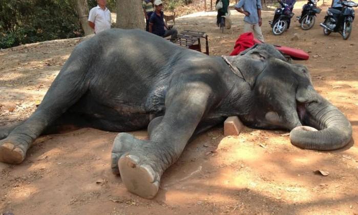 Elefante morto (Crédito: Divulgação)