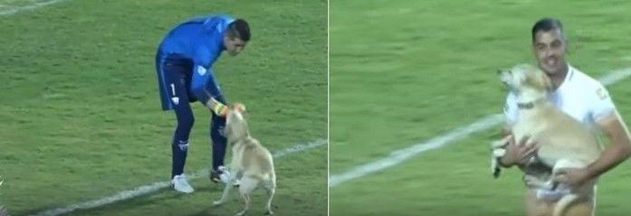 Cachorro correu, brincou mas foi pego (Crédito: Reprodução)