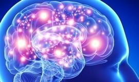 Confira detalhes do 'mapa' de da linguagem no cérebro