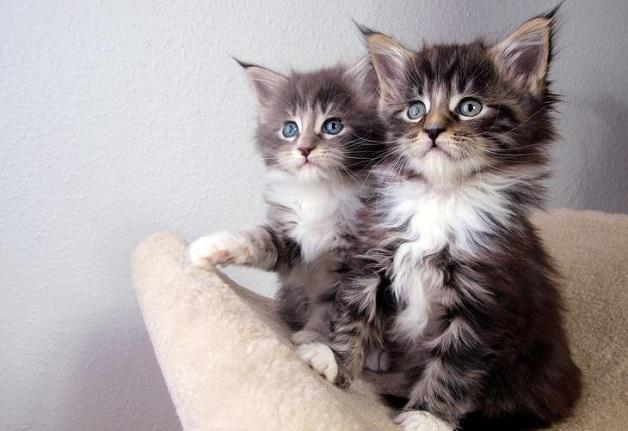 Animais adotados em pares (Crédito: Reprodução)