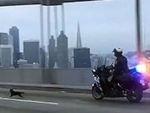Cão fugitivo tenta escapar da polícia nos EUA