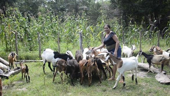 Mulheres nos Carnaubais (Crédito: Reprodução)