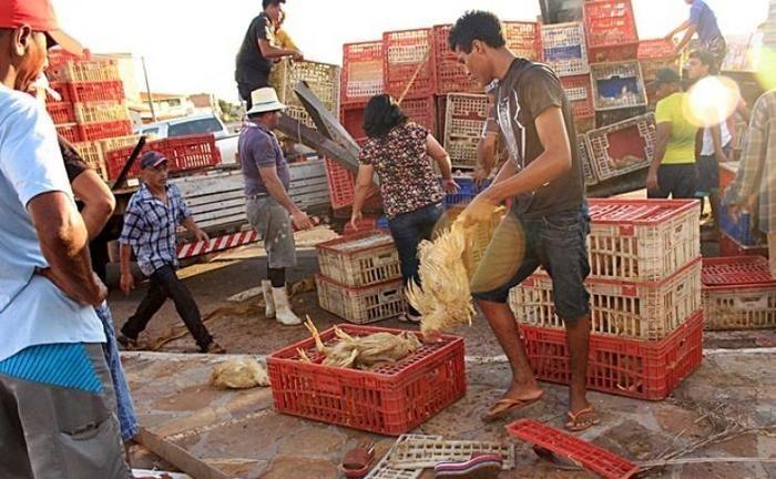 Caminhão tomba e carga de frango se espalha na BR-343 (Crédito: Reprodução)