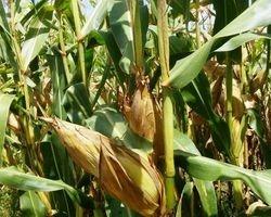 AGROBARRAS se prepara para colheita de milho, soja e sorgo