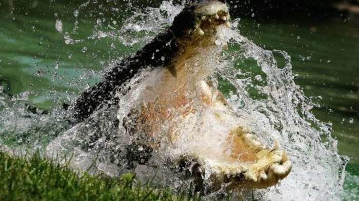 Crocodilo atacou pescadores na Austrália