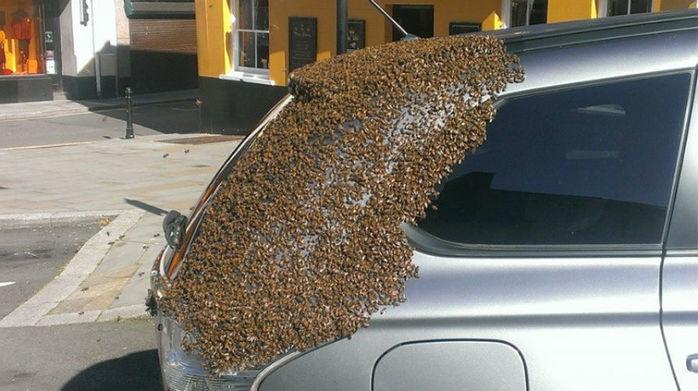 Cerca de 20 mil abelhas foram atraídas ao veículo (Crédito: Reprodução)