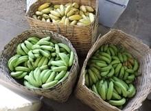 Pref. de União prioriza Agricultura Familiar na merenda escolar
