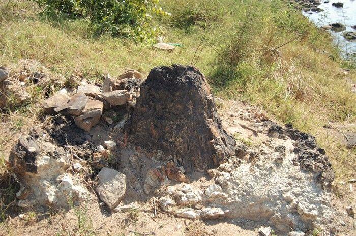 Tronco petrificado da Floresta Fóssil de Teresina: posição vertical é uma raridade em todo o mundo