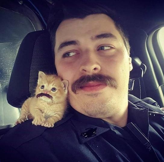 Policial colocou bigode no animal de estimação (Crédito: Reprodução)