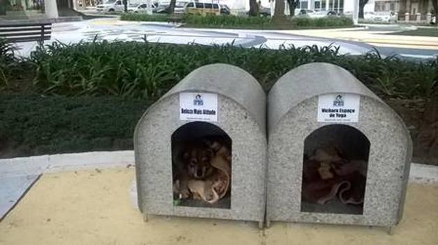 Projeto criado para abrigar câes de rua (Crédito: Reprodução)