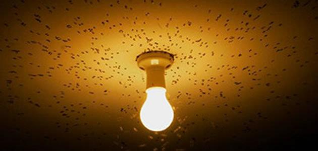 O que leva os insetos serem atraídos pelas lâmpadas?