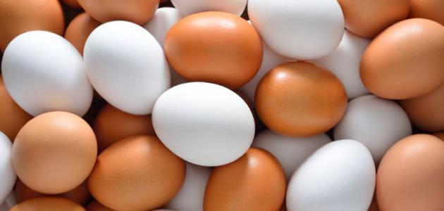 Saiba a diferença entre ovos brancos e marrons
