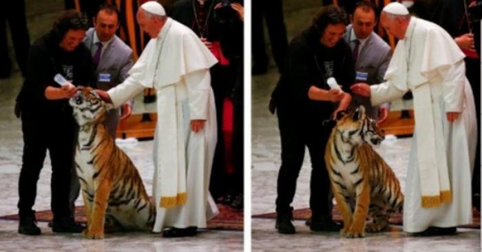 Papa acaricia Trigre e se assusta