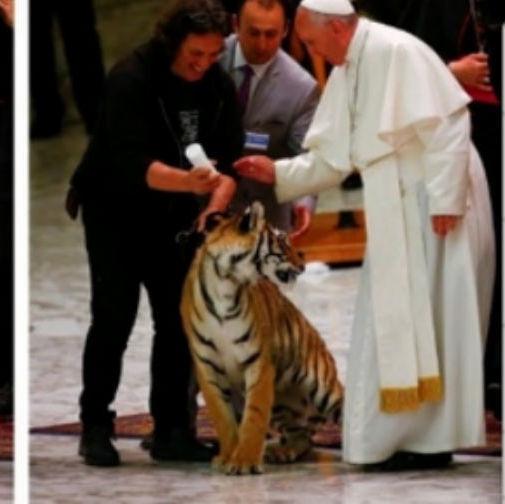 Papa Francisco tenta acariciar tigre no Vaticano e leva um susto