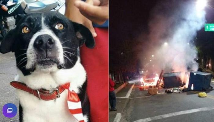 Cãozinho Bob foi morto com tiro na cabeça