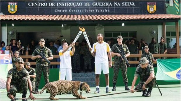 Onça é morta após percurso da Tocha Olímpica em Manaus (Crédito: REPRODUÇÃO)
