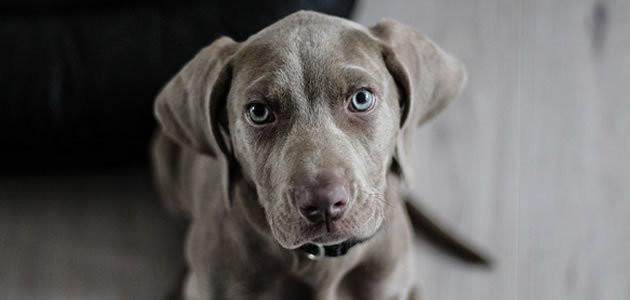 Cães não confiam em donos em momento de raiva