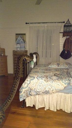 Cobra encontrada na casa (Crédito: Reprodução)