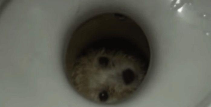 Cachorrinho preso em vaso (Crédito: Reprodução)
