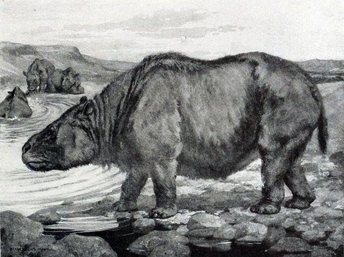 Toxon: animal semelhante a um rinoceronte e comportamento de hipopótamo, que viveu na região da Serra da Capivara há 10 mil anos.