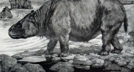 Na Serra da Capivara já viveu rinoceronte bem maior que uma Amarok