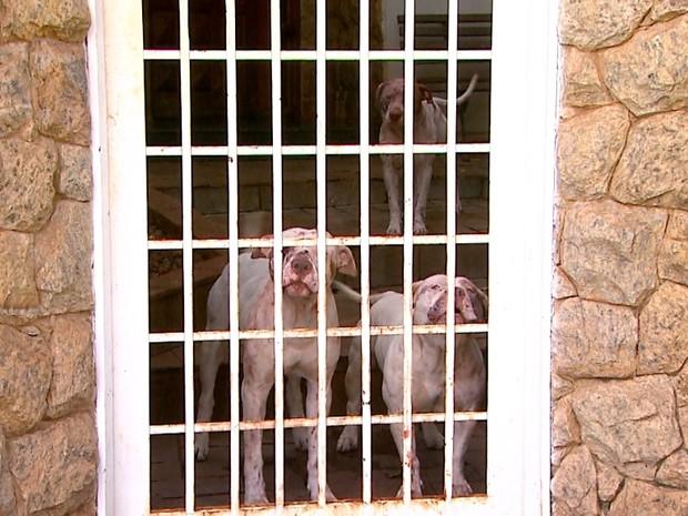 Cães se soltaram no momento do ataque (Crédito: Reprodução)