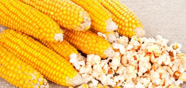 Saiba como o milho se transforma em pipoca