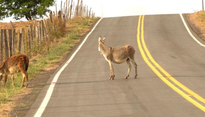 Animais em rodovia (Crédito: Reprodução)