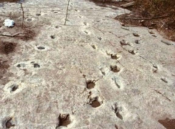 Pegadas de dinossauros juntas com pegadas humanas (Crédito: Reprodução)