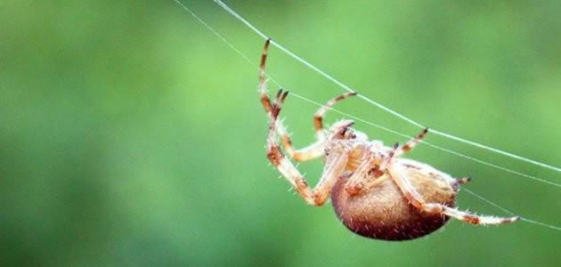 Conheça 11 aranhas mais perigosas do mundo