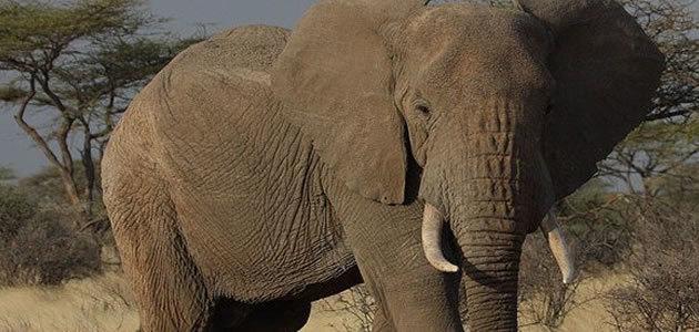 10 curiosidades sobre a África que você provavelmente não sabia