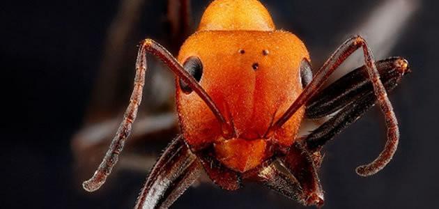 Uma formiga sobreviveria a uma queda do Empire State?